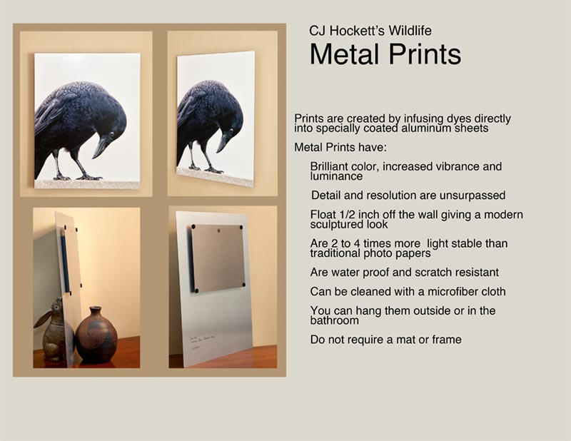 Hockett-_Metal_Print_Information_copy.jpg