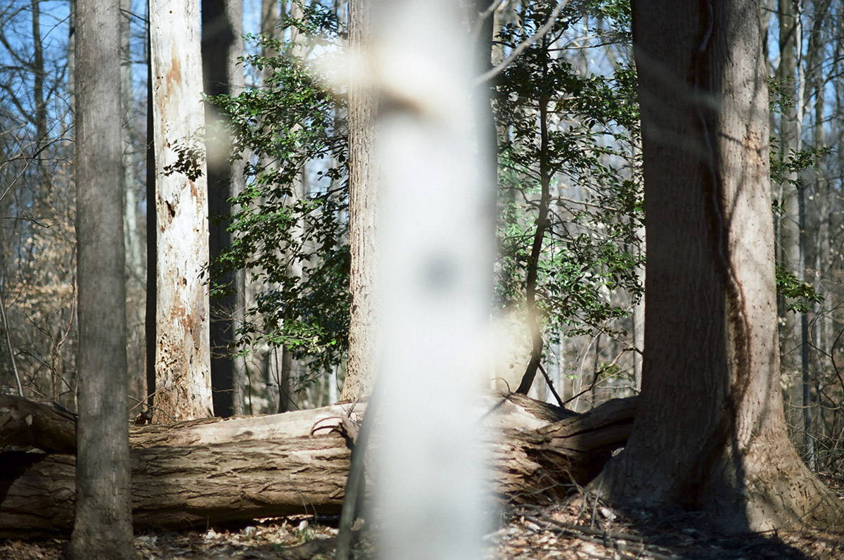 WoodsII_08.jpg